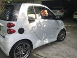 Witchdoktor's 2015 Smart