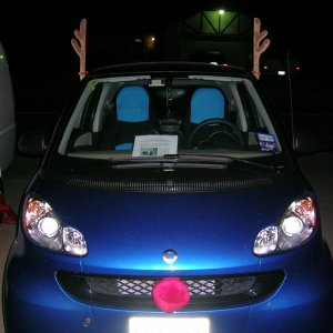 Blue Belle Dressed For Chrismas