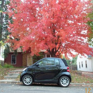 Our Cabriolet In The Autumn