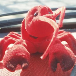 Doesn't Lobster Bob Look Happy On The Red Interior?